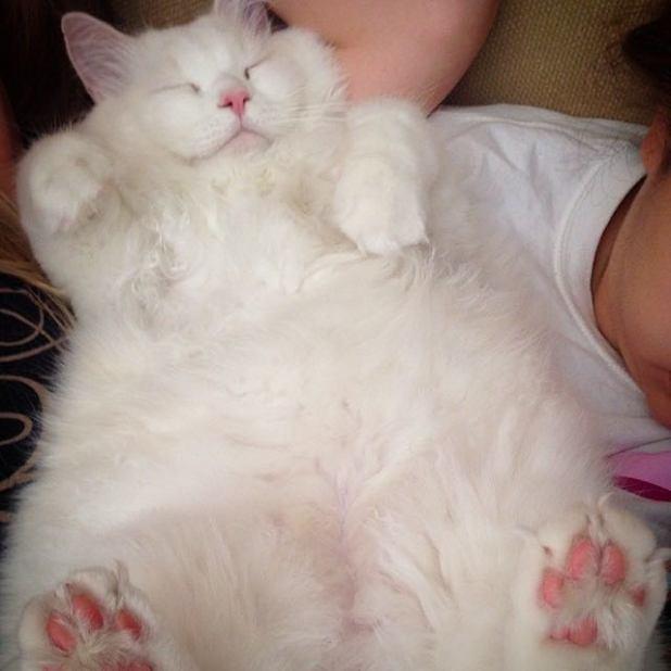 gatito-suave-encontrado-lado-de-una-carretera-11