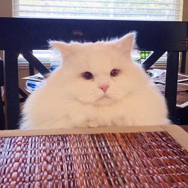 gatito-suave-encontrado-lado-de-una-carretera-8