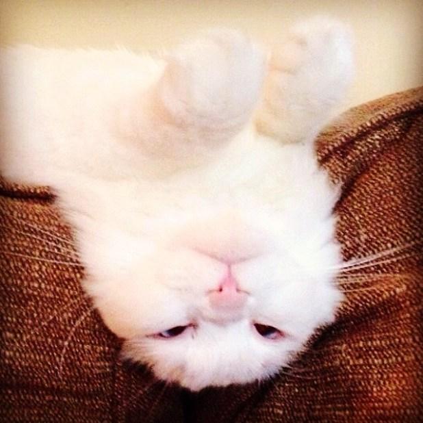 gatito-suave-encontrado-lado-de-una-carretera-9