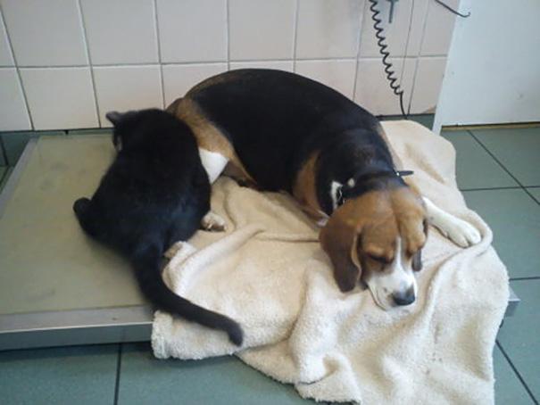 gato-enfermero-veterinario-refugio-animales-radamenes-polonia-8