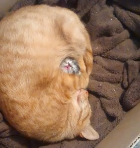 gattini-che-dormono-cutest-sleeping-kitties-ever-101__605