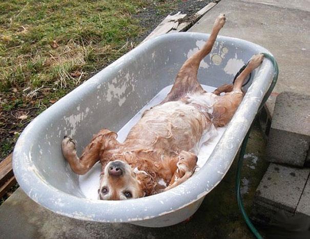 animales-disfrutando-bano-7