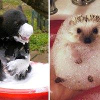 16 Animales Disfrutando De Lo Lindo Mientras Se Bañan