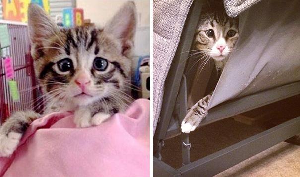 bum-gato-ojos-preocupados-3