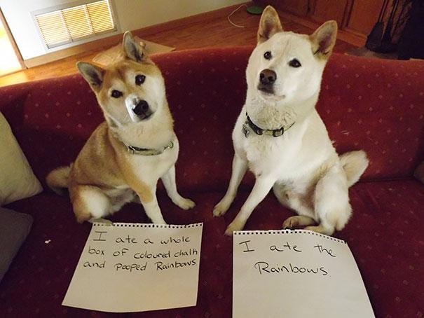 castigo-avergonzar-duos-animales-6