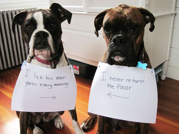 castigo-avergonzar-duos-animales-8
