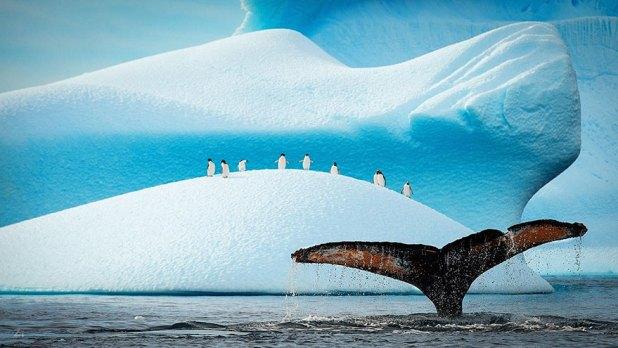 dia-concienciacion-pinguinos-41