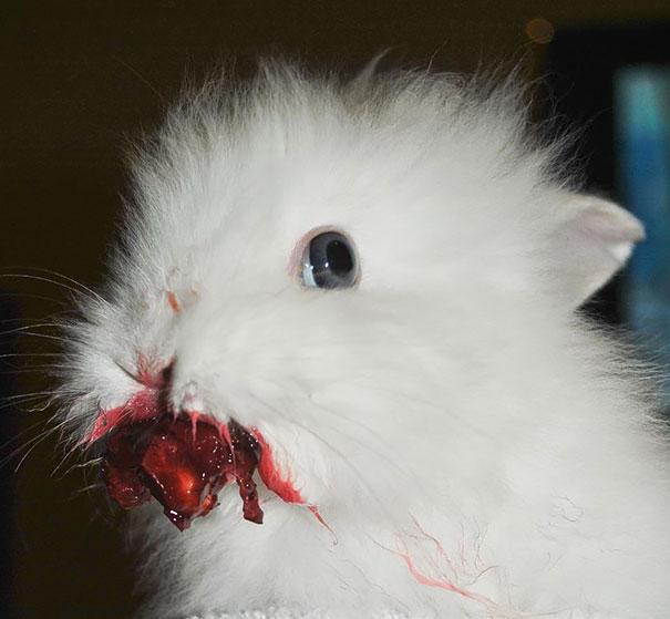 divertidos-animales-comiendo-3