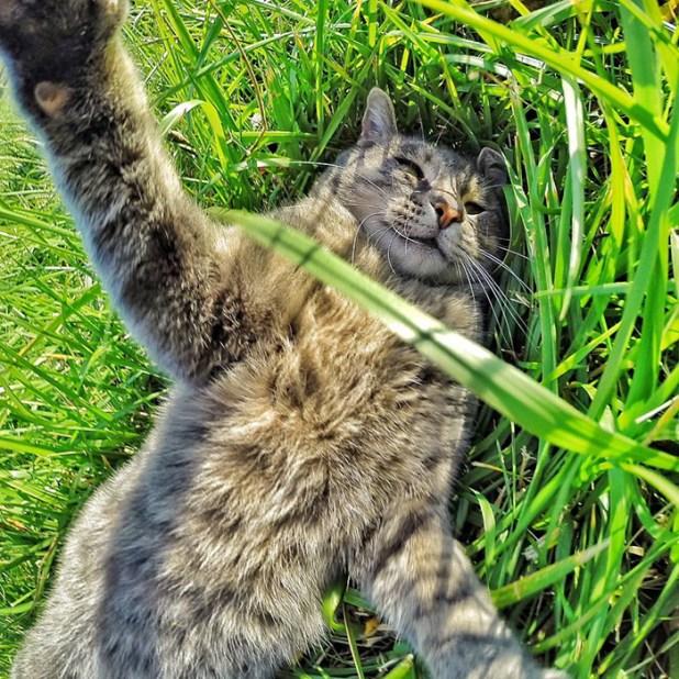 gato-manny-selfies-camara-gopro-4