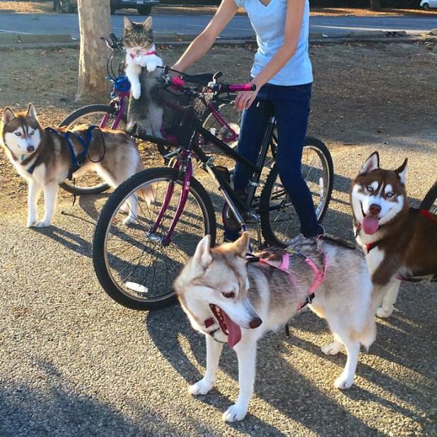 gato-rosie-amistad-3-perros-huskies-15