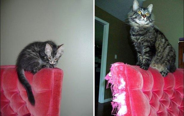 gatos-creciendo-antes-despues-24