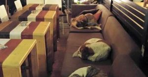 stray-dogs-sleep-cafe-hot-spot-lesbos-greece-fb1__700-png