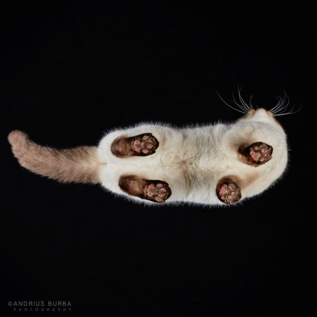 under-cats-fotos-gatos-debajo-andrius-burba-12