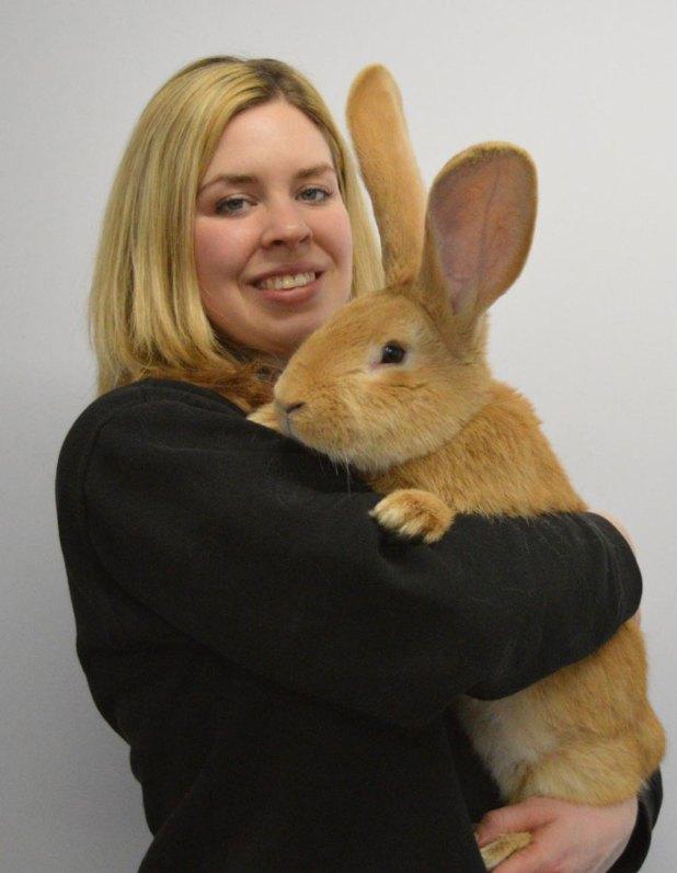 adopcion-conejo-gigante-continental-atlas-spca-3