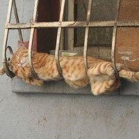 20 Animales Que Son Capaces De Dormirse En Cualquier Lugar