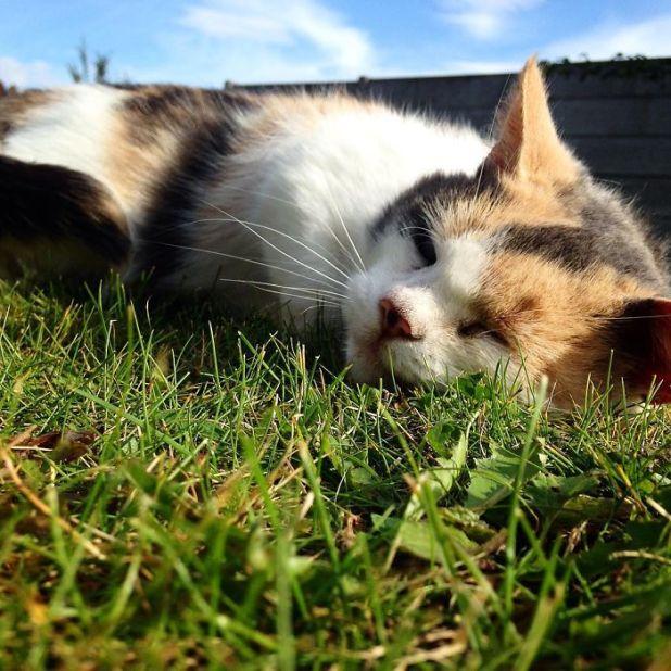 gato-ciego-rescatado-excursiones-stevie-irlanda-6