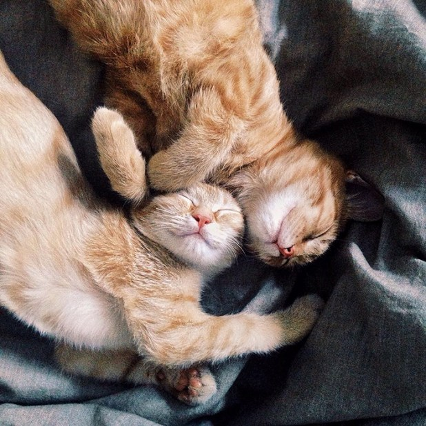 gatos-hermanos-huerfanos-rescatados-anyagrapes-1
