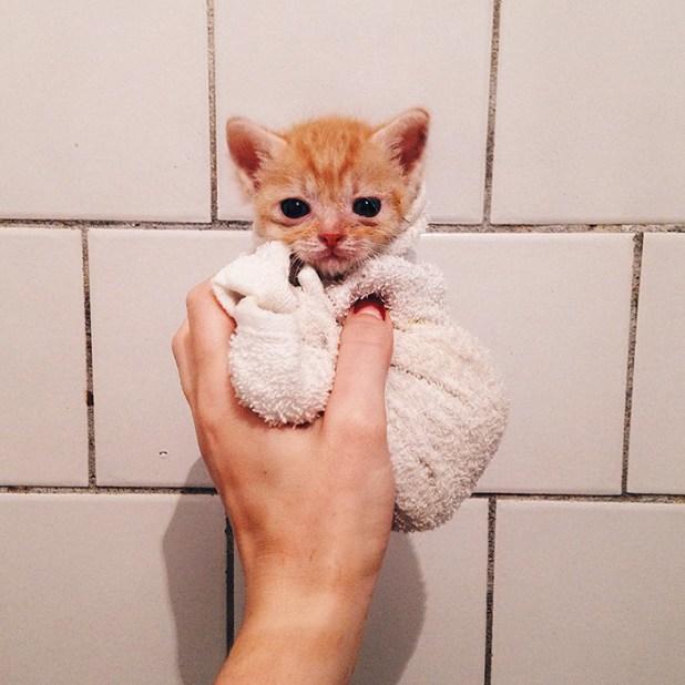 gatos-hermanos-huerfanos-rescatados-anyagrapes-16