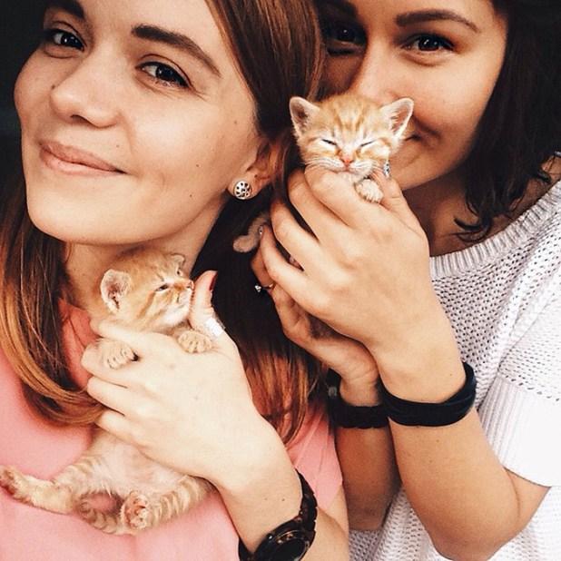 gatos-hermanos-huerfanos-rescatados-anyagrapes-17