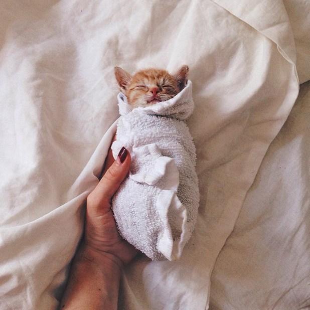 gatos-hermanos-huerfanos-rescatados-anyagrapes-18