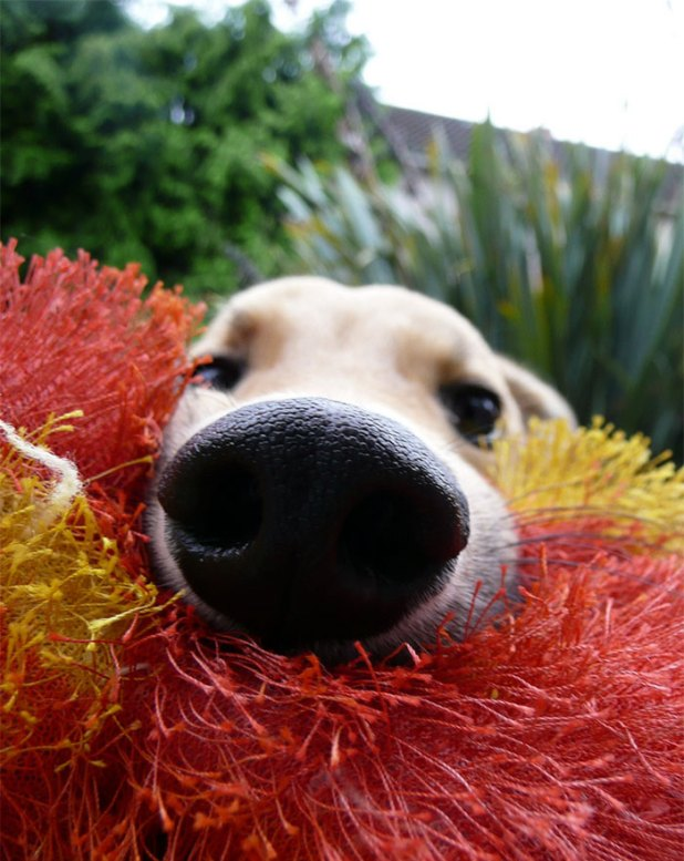 narices-perros-cerca-1