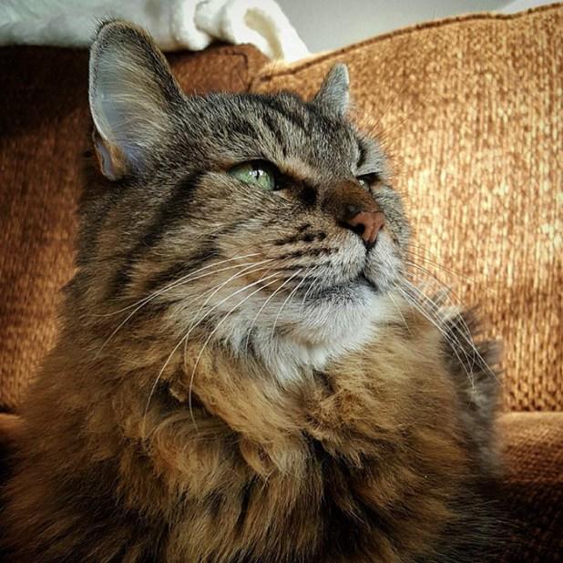 record-gato-viejo-mundo-corduroy-12
