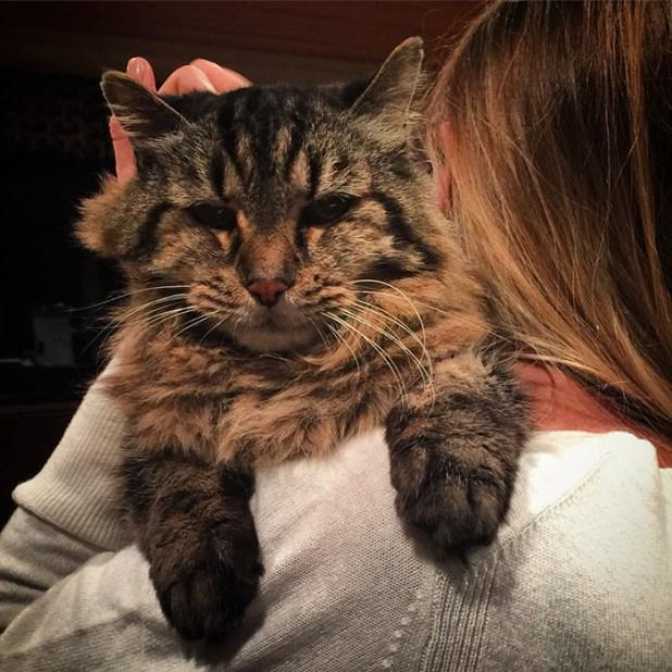 record-gato-viejo-mundo-corduroy-2
