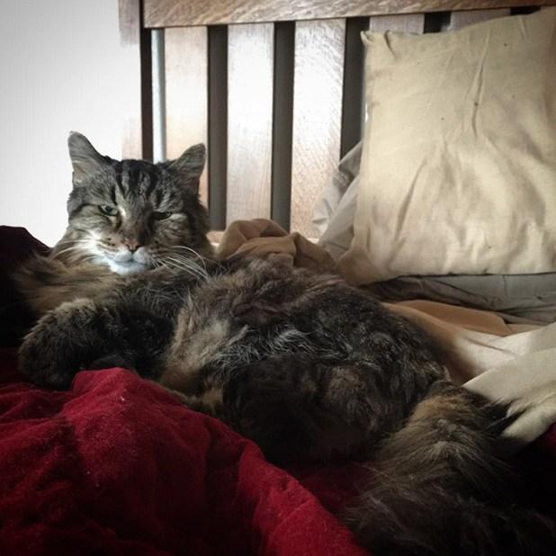record-gato-viejo-mundo-corduroy-4