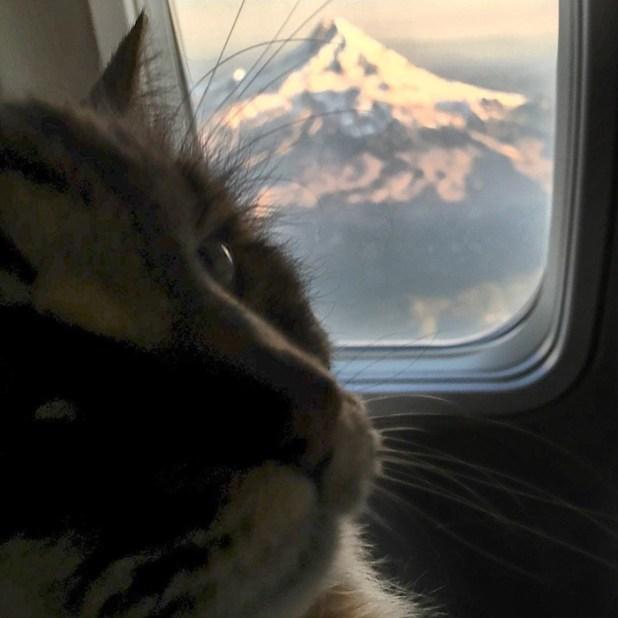 record-gato-viejo-mundo-corduroy-5