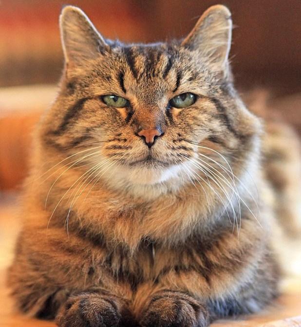 record-gato-viejo-mundo-corduroy-7