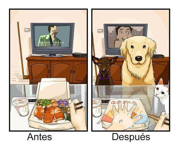 vida-antes-despues-perro-maimai-john-8