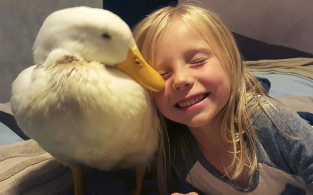 amistad-animal-pato-snowflake-kylie-brown-3