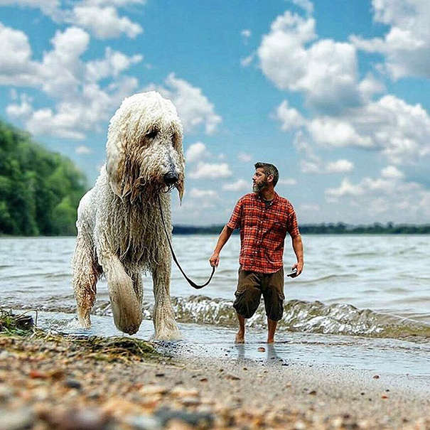 aventuras-juji-perro-gigante-photoshop-christopher-cline-13