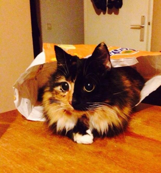 gato-ciego-quimera-adoptado-jasmine-sandra-coudray-4