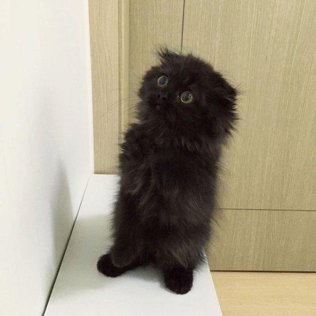 gato-negro-adorable-ojos-grandes-gimo-14