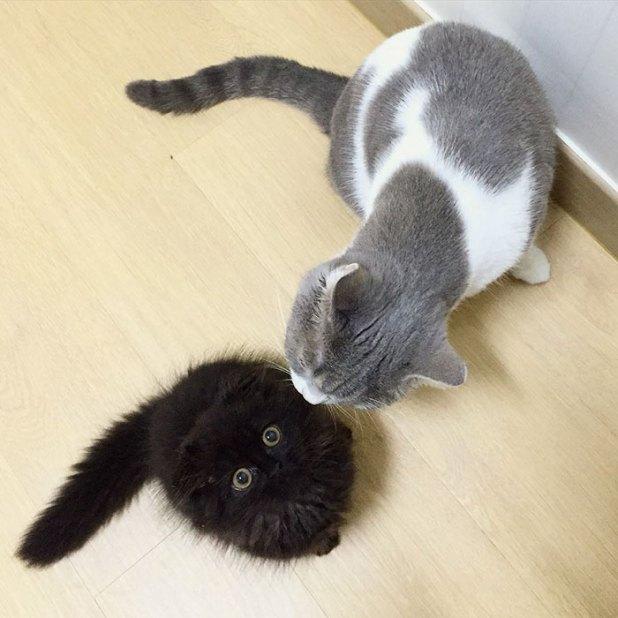 gato-negro-adorable-ojos-grandes-gimo-2