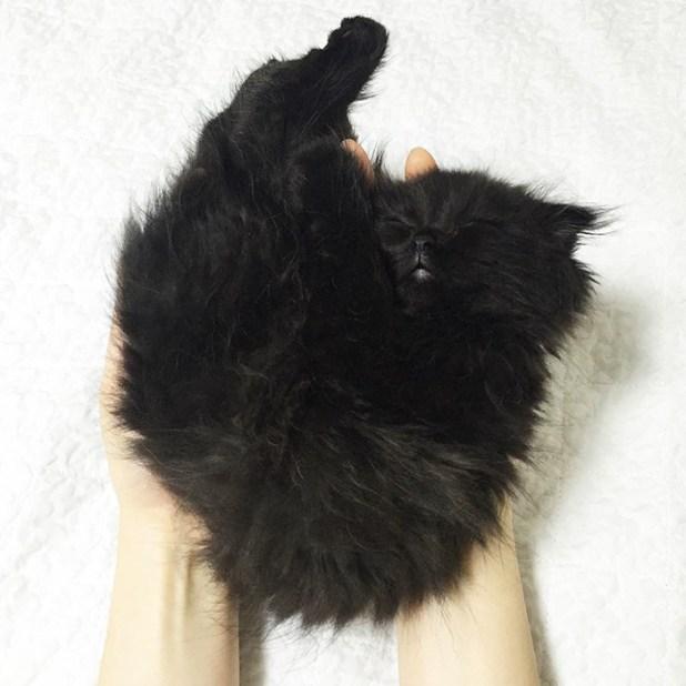 gato-negro-adorable-ojos-grandes-gimo-3