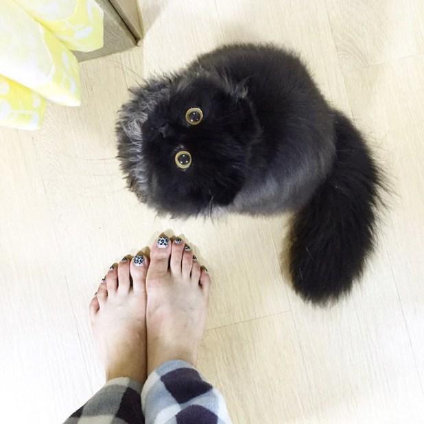 gato-negro-adorable-ojos-grandes-gimo-4