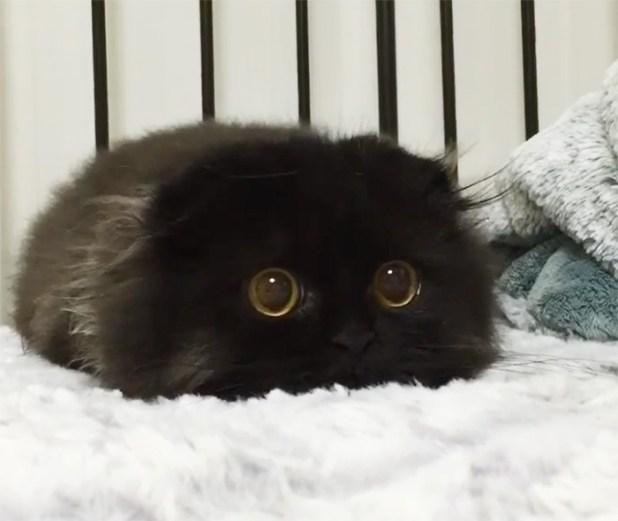 gato-negro-adorable-ojos-grandes-gimo-9
