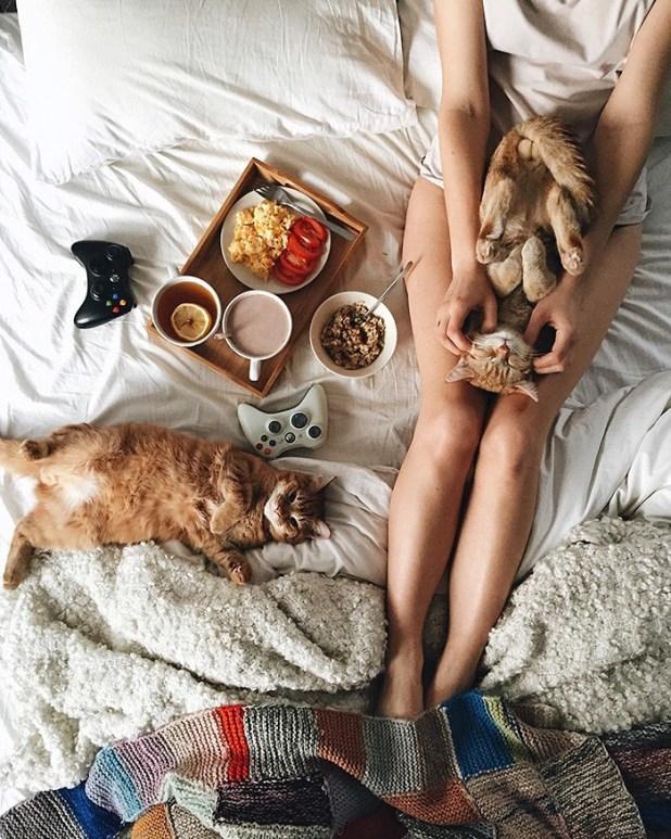 gatos-hermanos-huerfanos-rescatados-anyagrapes-5