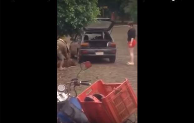 Martillazos a pitbull: El video que indigno a muchos.