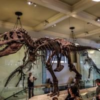 Milán: Museo Cívico de Historia Natural de Milán