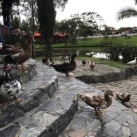 Oriente Antioqueño: Finca Hotel los Lagos [Pet Friendly]