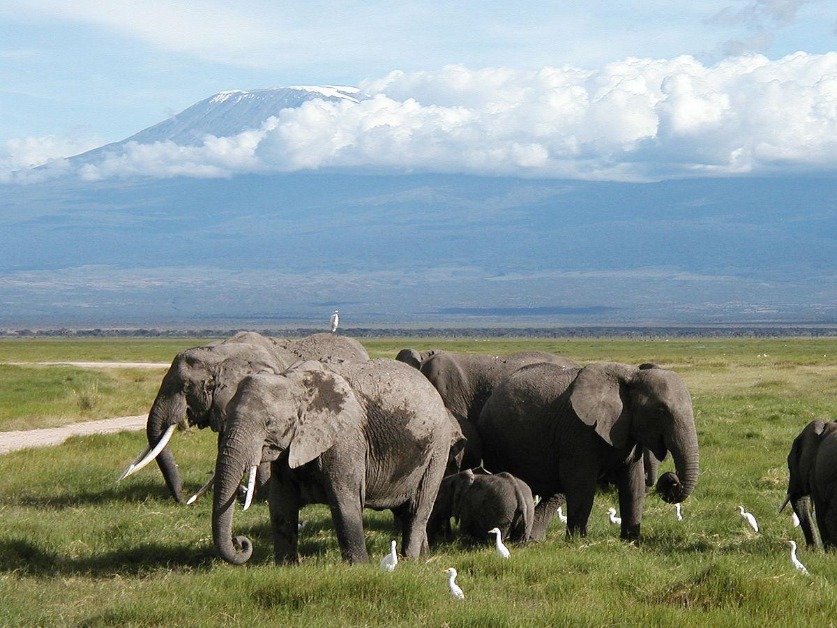 Kenya: Parque Nacional Amboseli