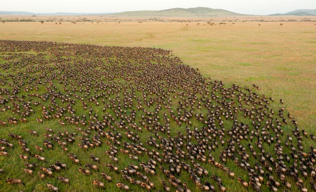 Tanzania: Parque Nacional Serengueti