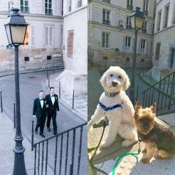Dog-Wedding-7