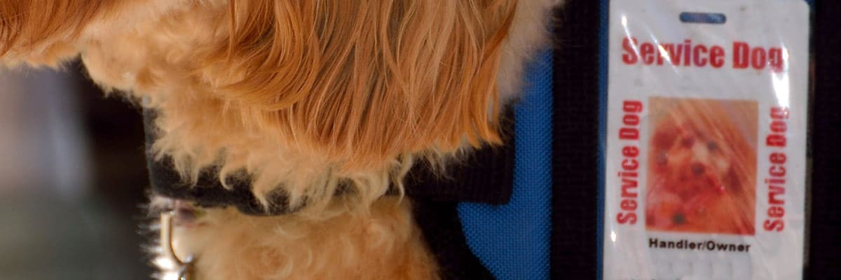 Cropped image of a service dog with service dog I.D., from Public Domain Pictures