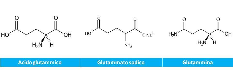 Glutammato, glutammina e glutammato monosodico, prodotto da Corynebacterium glutamicum