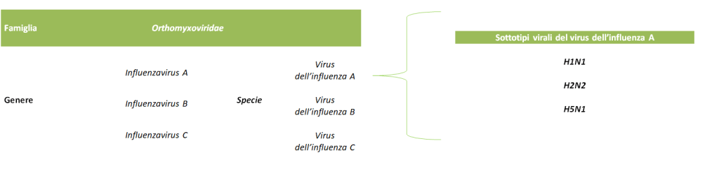 tassonomia virus influenza