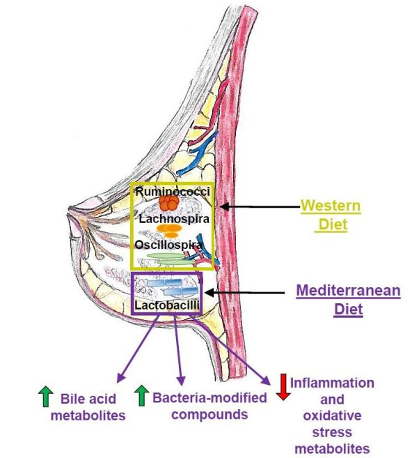 Calo dei metaboliti pro-infiammatori durante la dieta mediterranea